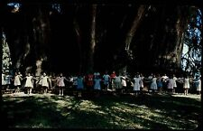 Tule Oaxaca Mexiko 1960/70 children demonstrate the size of Tule Tree Baum Bäume