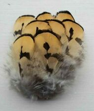 Fly tying / Native crafts / art - Reeves Pheasant mantle feathers