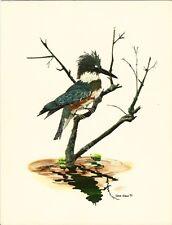 Eastern Belted Kingfisher - Gene Gray Vintage Art Card - Old Stock