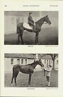 1896 racing illustrated print - horses perflex & calais and more on the back !