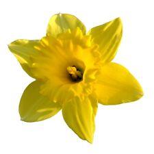 24 glaçages pour gâteau de givrage fée décorations comestibles-Fleurs Jaunes Daffodil ND1