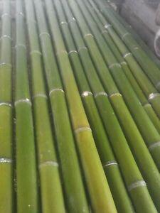 canne di bambù giganti - bamboo-  diametro 4/5 cm - h. 150 cm