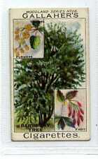 (Jc1879-100)  GALLAHERS,WOODLAND TREES,THE BARBERRY TREE,1912#68