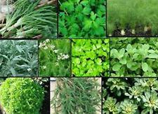 HERB Garden Lot ~ 10 Varieties ~ Over 2,200 FRESH Seeds ~ Non GMO -- Lot #2