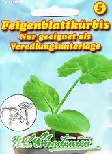 N:L:Chrestensen Feigenblattkürbis Nur als Veredelungsunterlage Gurken   464029