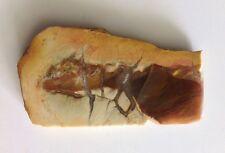 Limb Cast Agate ( Agatized Wood )
