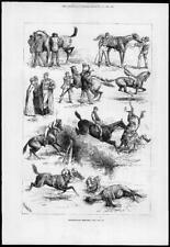 1880 Antique Print -  SPORTS Steeplechase Horse Jockeys Hedge Ditch    (146)