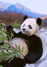 3D Postcard Lenticular - Giant Chinese Panda relaxing - Greeting Card