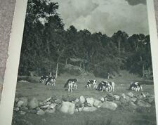 1946 Photo Print STERLING MEMORIAL LIBRARY YALE UNIVERSITY & RURAL IDYL