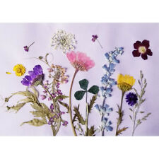 12Pack Natural Real Pressed Dried Flowers for DIY Craft Bookmark Card Making