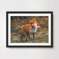 FOX ANIMAL WILDLIFE PHOTOGRAPHY ART PRINT Poster Home Decor Wall Picture !!!!