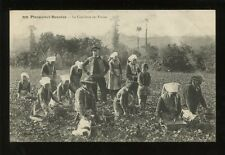 France Brittany PLOUGASTEL-DAOULAS Cueillette des Fraises strawberry pickers PPC