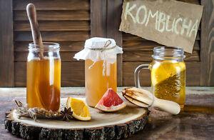 Nourishme Organics Raw Organic Vegan Jun Kombucha Scoby