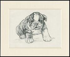 BULLDOG PUPPY LOVELY VINTAGE 1930'S DOG SKETCH PRINT by KF BARKER READY MOUNTED