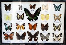 REAL 20 BUTTERFLY MOUNTED DISPLAY FRAMED BIG BROOKIANA BIRDWING COLORFUL GIFT