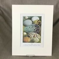 1895 Antico Vittoriano Stampa Uccelli Uova Egg Naturale Storia