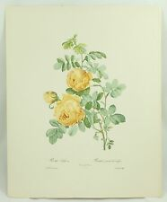 Pierre-Joseph Redoute Les Roses Rosa Sulfurea Sulpher Rose Vintage Print