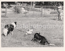 DOGS And Ducks 8 x 10 FOUND PHOTOGRAPH Color FREE SHIPPING Original Vintage H 50