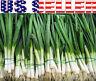 200+ ORGANICALLY GROWN Tokyo Bunching Long White Onion Seeds Heirloom NON-GMO