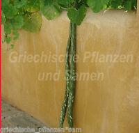 🔥  SPECKLED SNAKE 5 frische Samen leckeres Gemüse * Langenaria siceraria
