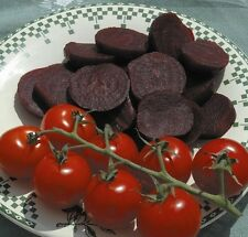 Kings Seeds - Beetroot Wodan F1 - 200 Seeds