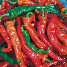 Hot Chilli Pimienta-Maules Rojo Caliente 10 semillas-liveseeds -