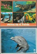 Florida Postcards. 6 cards. 4x6. Animal Life. Porpoise. Fish. Turtle