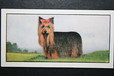 Yorkshire Terrier     Early 1960's Dog Portrait Card
