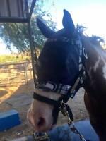 Large Horse Fly Mask - Handmade - Dual adjustable - Quarter Horses & Paints