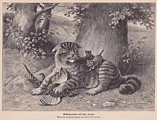 Wildkatze, Rebhuhn - Grafik, Stich, Holzstich nach L.Beckmann um 1890