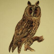 GUFO Long-Eared Owl Otus Cromolitografia Originale 1800 Ornitologia Hornitology