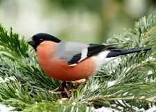 Bullfinch Charity Christmas Cards Pack 10 FREE P&P