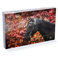 "Beautiful Black Horse Photo Block 6 x 4"" - Desk Office Art Cool Gift #8774"