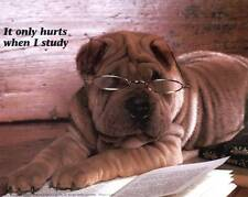 "Shar Pei ""Student"" with Glasses: Cute 10x8 In Photo Print/Mini Poster"
