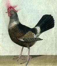 Oiseau de martinet LA POULE Gallinacé gravure de 1796