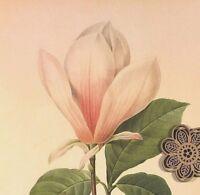 VTG Botanic Art Print Redoute Wildflowers Flora Engraving Repro PINK FLOWERS