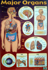Major Organs Human Body Biology Educational Poster (0096)