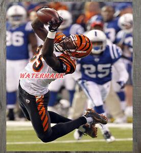 NFL Cincinnati Bengals Chad Johnson Ocho Cinco Diving Catch 8 X 10 Photo