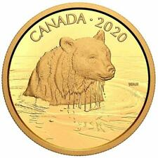 Kanada - 350 Dollar 2020 - Grizzlybär - Wildlife Portraits (2.) - 35 gr Gold PP