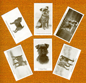 BRUSSELS GRIFFON SET OF SIX NAMED DOG COLLECTABLE TRADE CARDS GREAT GIFT