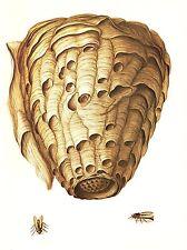 "1977 VINTAGE LAROUSSE ""HORNET NEST"" AMAZING STUNNING COLOR Art Print Lithograph"
