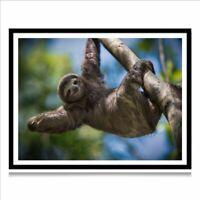 Sloth DIY 5D Full Diamond Painting Cross Stitch Kit Home Decor Craft
