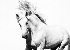 Mural De Pared Foto Wallpaper White Horse Mustang Pared Arte, Decoración De Paredes Interiores