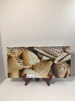 Pier 1 Porcelain Long Sea Shells Decor/Serving Platter Square Tray Brown White