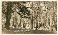 RPPC Postcard Frashers Foto deer in kaibab national forest AZ near Grand Canyon