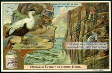 Eider Duck Gathering Eggs Bird  c1905 Trade Ad Card