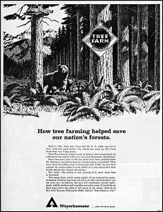 1967 Black bears mountain forest Weyerhaeuser Tacoma vintage art print Ad adL92