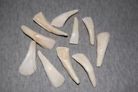 10 Pre Drilled Genuine white Buffalo Teeth Tooth Beads pendant Jewelry Elk Moose