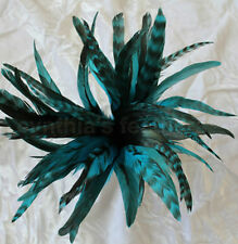"50+ Turquoise 6-8"" CHINCHILLA COQUE rooster Feathers, Millinery, Cynthia's"