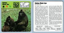 Celebes Black Ape - Mammals - 1970's Rencontre Safari Wildlife Card